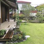雨の中、庭の植物も元気です。