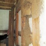 シロアリの巣 シロアリは水を運ぶ