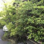 緑のまぶしい季節